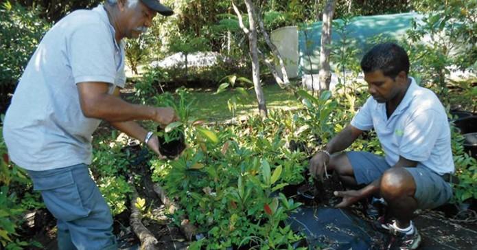 Vente de plantes de la pépinière sociale à petit prix